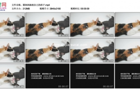 4K实拍视频素材丨猫妈妈舔舐自己的孩子