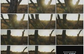 高清实拍视频素材丨透过枯树树干摇摄夕阳照射下的草原