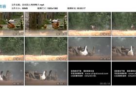 高清实拍视频丨农村的土鸡和鸭子