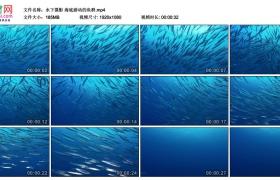 高清实拍视频丨水下摄影 海底游动的鱼群