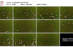 高清实拍视频素材丨无人机航拍草地上绵羊羊群
