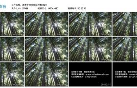 【高清实拍素材】森林中阳光穿过树梢