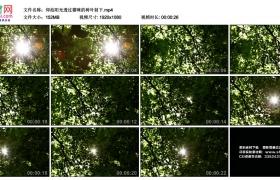 高清实拍视频丨仰拍阳光透过茂密的树叶射下