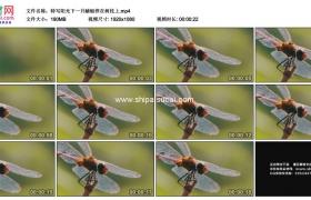 高清实拍视频素材丨特写阳光下一只蜻蜓停在树枝上