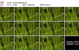4K视频素材丨阳光照射下蜘蛛织网