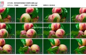 高清实拍视频素材丨绿屏前旋转玻璃盘中的新鲜水蜜桃