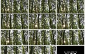 4K实拍视频素材丨航拍阳光照射进森林