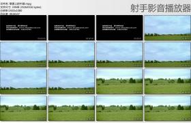 [高清实拍素材]草原上的牛群