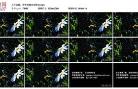 高清实拍视频丨野外的蛛丝和野花