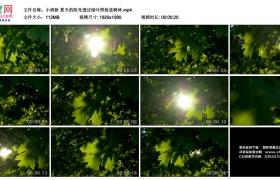 高清实拍视频素材丨小清新 夏天的阳光透过绿叶照射进树林