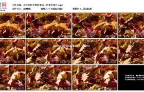 高清实拍视频素材丨秋天的阳光照射着地上的黄色树叶
