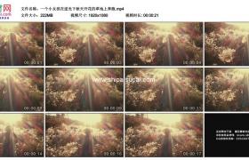 高清实拍视频素材丨一个小女孩在逆光下秋天开花的草地上奔跑