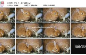 高清实拍视频素材丨特写一只小兔子吃食物