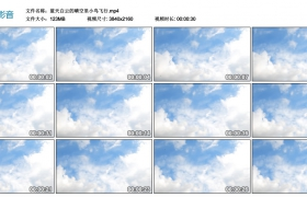 4k视频丨蓝天白云的晴空里小鸟飞行