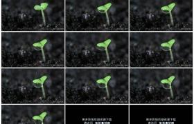 4K实拍视频素材丨给绿色的植物幼苗浇水