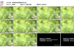 高清实拍视频丨小清新 绿树树影婆娑模糊光影