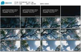 [高清实拍素材]阳光穿过树叶透射(运动)