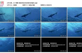 高清实拍视频丨水下摄影 海底仰拍在海里游动的鲨鱼
