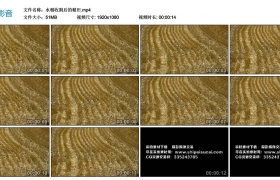 高清实拍视频丨水稻收割后的稻田