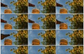 高清实拍视频素材丨仰拍在蓝天下的啤酒花旁倒啤酒