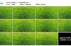 高清实拍视频丨航拍阳光下一片绿油油的稻田