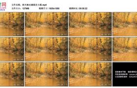 高清实拍视频丨秋天雨水滴落在小溪