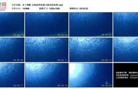 高清实拍视频丨水下摄影 从海底仰拍海中游动的鱼群