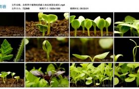 高清实拍视频丨自然界中植物幼苗破土而出到茁壮成长 种子发芽