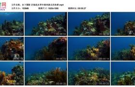 高清实拍视频丨水下摄影 在海底水草中游来游去的鱼群
