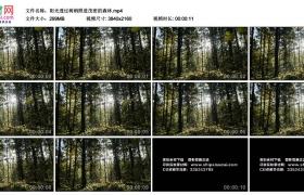 4K实拍视频素材丨阳光透过树梢照进茂密的森林