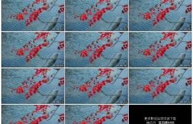 高清实拍视频素材丨秋天流动的河面上随风摆动的红叶