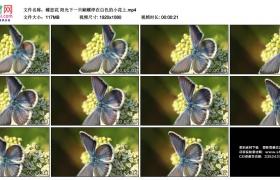 高清实拍视频素材丨蝶恋花 阳光下一只蝴蝶停在白色的小花上