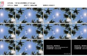 高清实拍视频素材丨一架飞机从热带椰树上空飞过