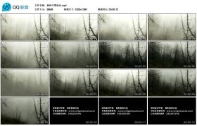 【高清实拍素材】森林中雾流动