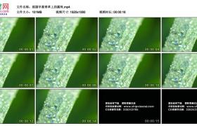 高清实拍视频丨摇摄早晨青草上的露珠