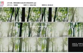 高清实拍视频素材丨横移拍摄阳光透过树木照射进树林