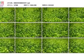 高清实拍视频丨摇摄茶园里嫩绿的茶叶