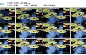 高清实拍视频丨池塘荷叶上的青蛙跳跃