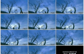 4K实拍视频素材丨仰拍流动的乌云下干枯的树木延时摄影