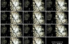 高清实拍视频素材丨树木倒映在微波翻滚的水面上