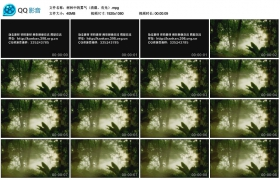 [高清实拍素材]树林中的雾气(清晨、有光)