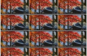 4K实拍视频素材丨秋天红色树叶后的古老建筑