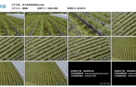 高清实拍视频丨苗木种植基地航拍