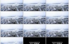 高清实拍视频素材丨秋天晨雾中挂着霜花的野草