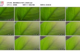 高清实拍视频素材丨微距摇摄逆光中绿叶上的叶脉脉络