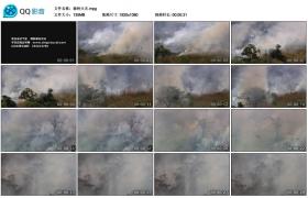 [高清实拍素材]森林火灾
