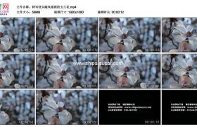 高清实拍视频素材丨特写枝头随风摇摆的玉兰花