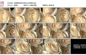 高清实拍视频丨拍摄旋转着带水珠的白色玫瑰花