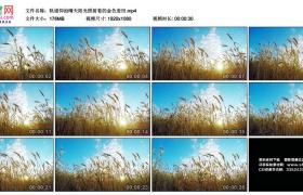 高清实拍视频丨轨道仰拍晴天阳光照射着的金色麦田