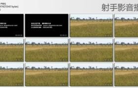[高清实拍素材]收割水稻2